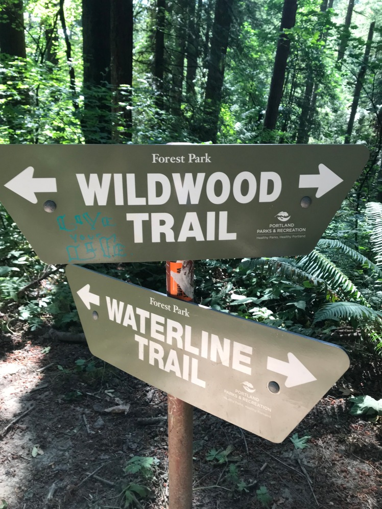 Forest Park Trails